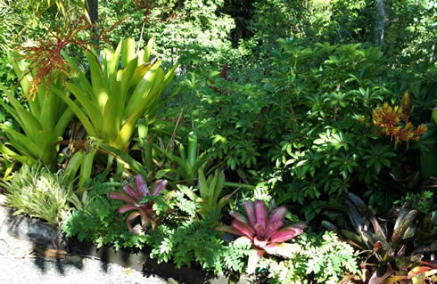 Landscaping with Bromeliads